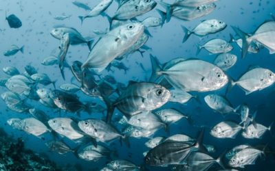 The Fishy Business of Sourcing Sustainable Seafood