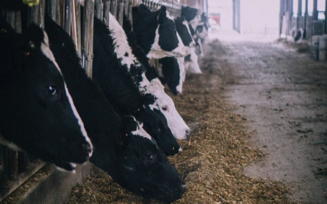 Interactive look at the carbon cost of eating meat and dairy
