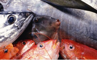 The Importance of Food Traceability: A Case Study of the Accredited Fish Farm Scheme