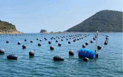 Does homegrown, organic seafood really exist in Hong Kong?